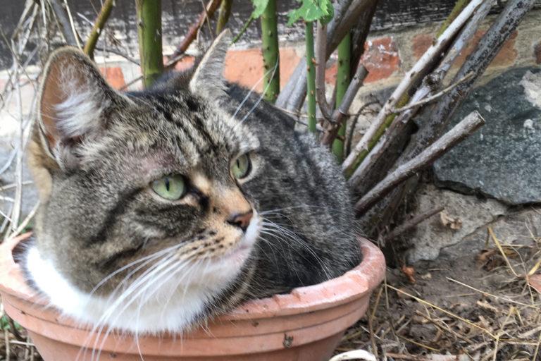 Unsere Katze Gipsy